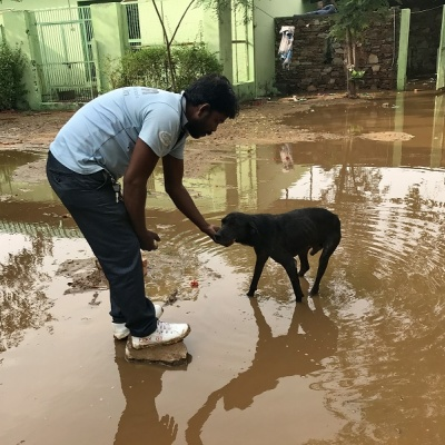 Animal Charity in Monsoon Crisis