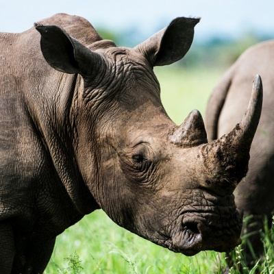 Medivet Clients Reach One Million Donation  Milestone in Support of Africa's Rhinos