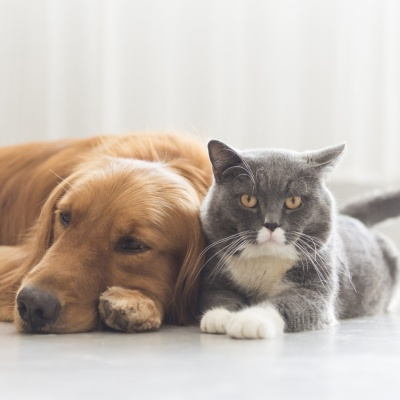 The BSAVA published new scientific information on the use of CBD in dogs and cats