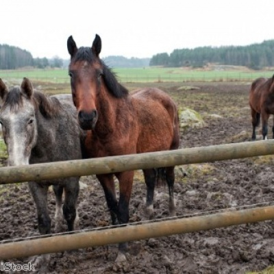 Boehringer Ingelheim wants UK Vets to highlight signs of laminitis