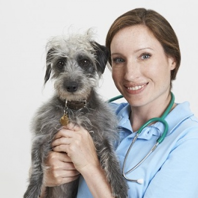 Royal College of Veterinary Surgeons a top UK place for women to work