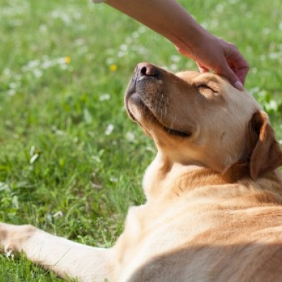 Pet exposure in childhood 'can help protect against allergies and obesity'