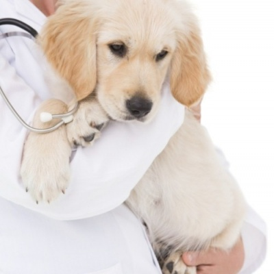 Ceva launches new congestive heart failure therapy for dogs