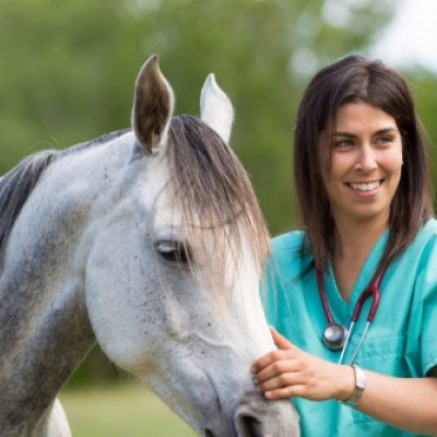 CVS announce takeover of B&W Equine Vets