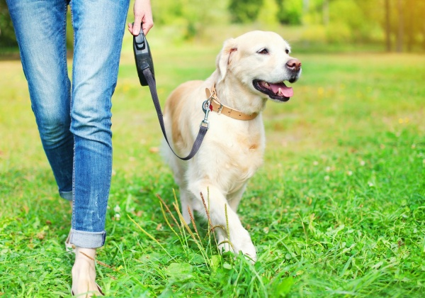 Dogs May Lower Your Heart Disease Risk